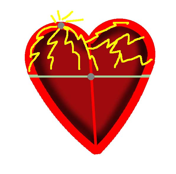 anatomisk korrekt hjerte