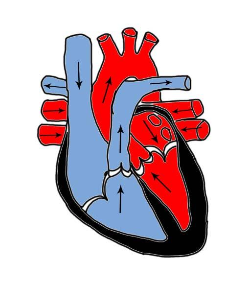 fimrehår i lungerne